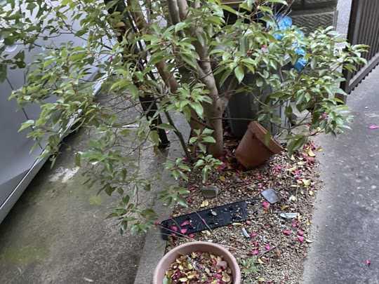 大阪府東大阪市で草刈り・植木の処分のご依頼